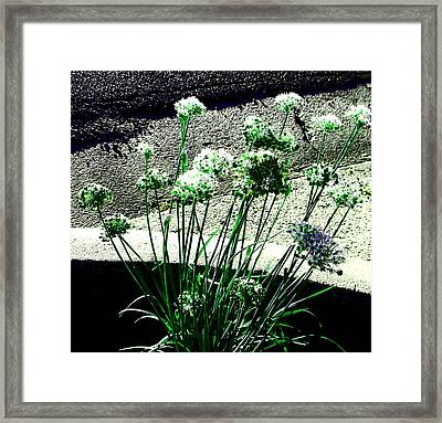 Framed Print featuring the photograph Queen Anne's Lace by Lenore Senior