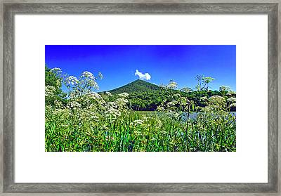 Queen Anne's Lace, Peaks Of Otter  Framed Print