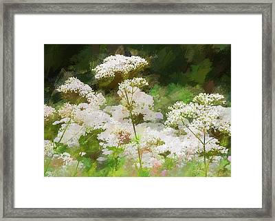 Framed Print featuring the photograph Queen Annes Lace. by Rob Huntley