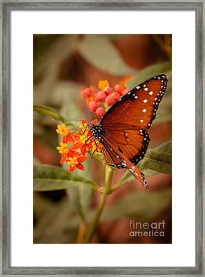 Queen Butterfly On Flowers Framed Print by Ana V Ramirez