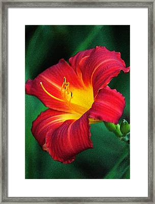 Queen Charlotte Daylily In Pastel Framed Print