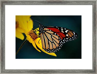 Queen Monarch 2 Framed Print