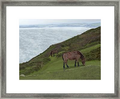 Queen Of Rame Framed Print