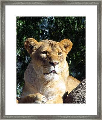 Queen Of The Beasts Framed Print