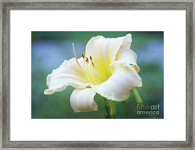 Queen Of The Garden Framed Print