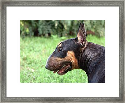 Queen Of The Guile And Mischief Framed Print by Irina Safonova