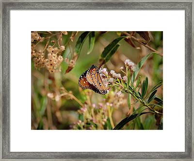 Queen Of The Hassayampa Framed Print