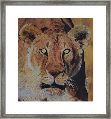 Queen Of The Jungle Framed Print by Don MacCarthy