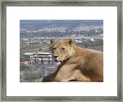Queen Of The Mountain Framed Print by Jeanette Oberholtzer