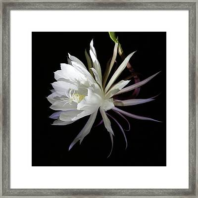 Queen Of The Night Framed Print by Robin Street-Morris