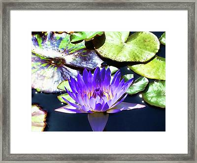 Queen On The Lake Framed Print
