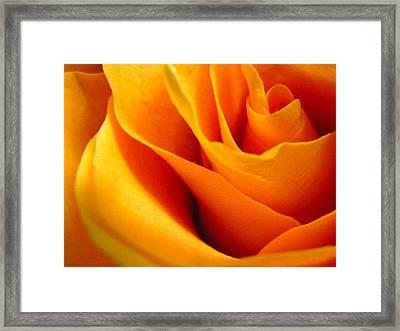 Queen Rose Framed Print