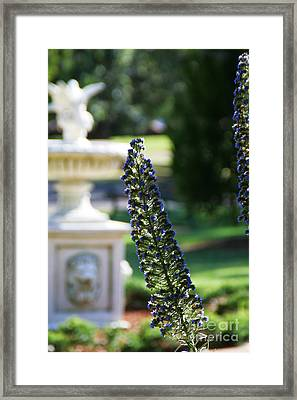 Queens's Park Vista Framed Print by Andrea Jean
