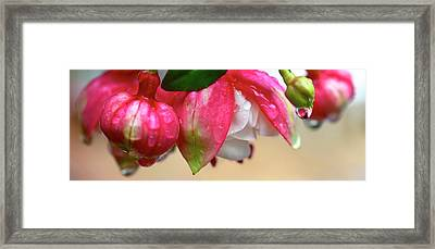 Framed Print featuring the photograph Quenched by Corinne Rhode