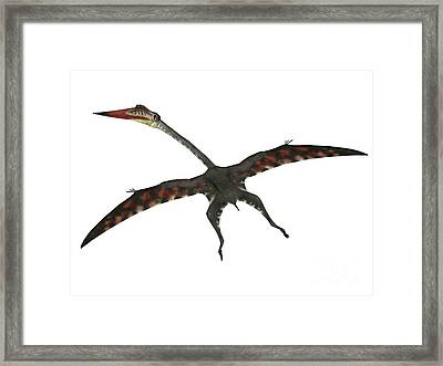 Quetzalcoatlus Flying Reptile Framed Print by Corey Ford