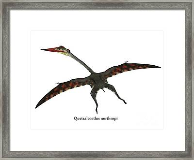 Quetzalcoatlus Flying Reptile With Font Framed Print by Corey Ford