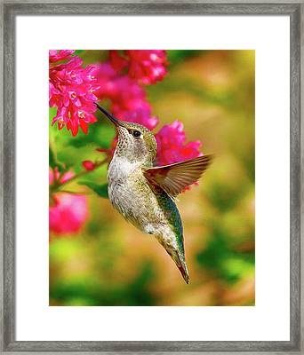 Quick Lunch Framed Print by Sheldon Bilsker