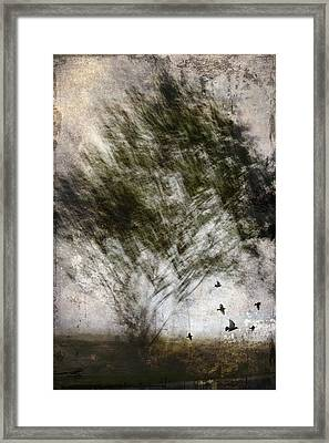 Quickly Framed Print by Carol Leigh
