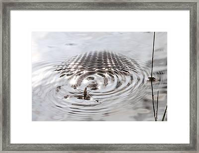 Quicksilver Strider Framed Print by Allen Lefever