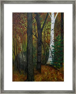 Quiet Autumn Woods Framed Print