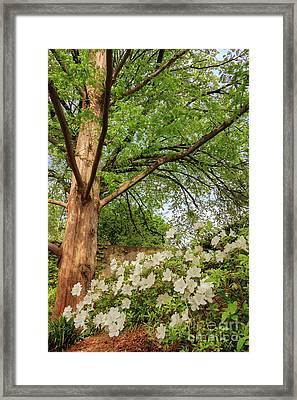 Quiet Beauty Framed Print by Elizabeth Dow
