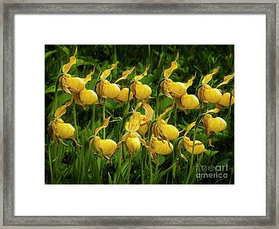 Quiet By Nature Framed Print by Bob Christopher