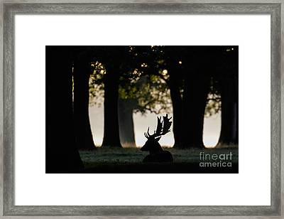 Quiet Copse Framed Print