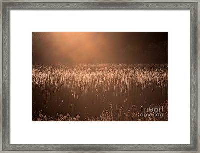 Quiet Evening Light Framed Print