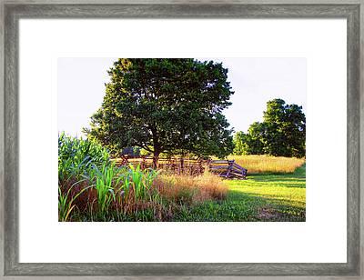Quiet Field Framed Print