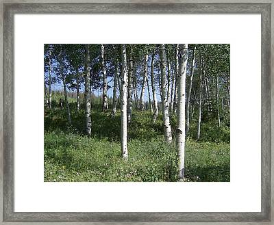 Quiet Forest Framed Print by Susan Pedrini