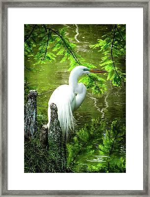 Quiet Moments Of Elegance Framed Print by Karen Wiles