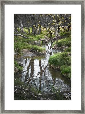 Quiet Stream Framed Print by Scott Norris