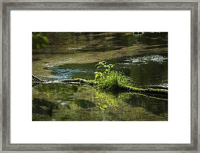 Quiet Trout Stream Framed Print
