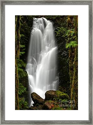 Quinault Rainforest Ghost Framed Print by Adam Jewell