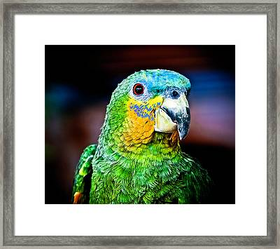 Quinny Framed Print by Laura M. Vear