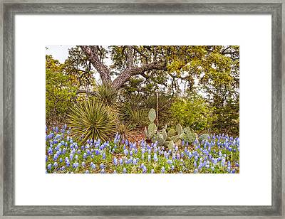 Quintessential Texas Hill Country - Yucca Prickly Pear And Bluebonnets - Willow City Loop  Framed Print by Silvio Ligutti