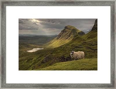 Quiraing Sheep Framed Print by Wade Aiken