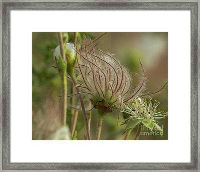 Quirky Red Squiggly Flower 2 Framed Print