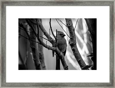 Quite Bird In The Tree Framed Print