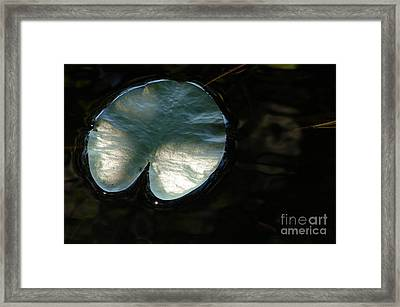 Quiver Framed Print by Priscilla Richardson