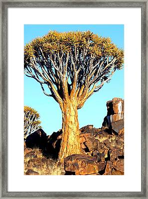 Framed Print featuring the photograph Quiver Tree In Namibia by Riana Van Staden
