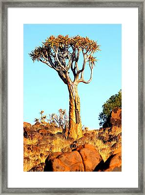 Framed Print featuring the photograph Quiver Tree by Riana Van Staden