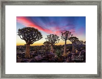 Quiver Trees 10 Framed Print