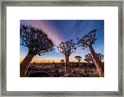 Quiver Trees 13 Framed Print