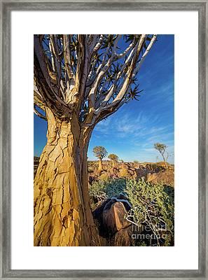 Quiver Trees 4 Framed Print