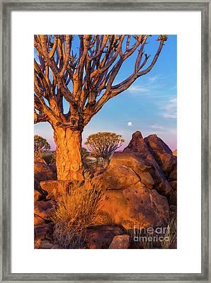 Quiver Trees 8 Framed Print