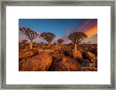 Quiver Trees 9 Framed Print