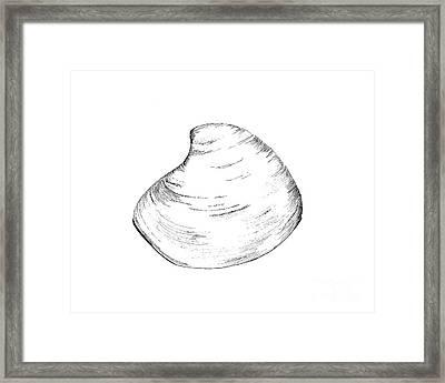 Quohog Shell Framed Print by Jeff Greiner