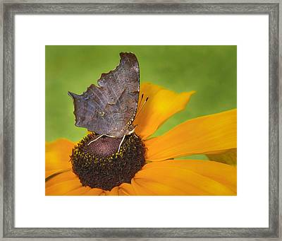 Question Mark Butterfly Framed Print