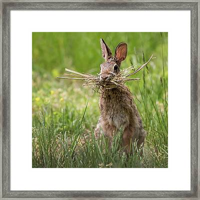 Rabbit Collector Square Framed Print by Terry DeLuco